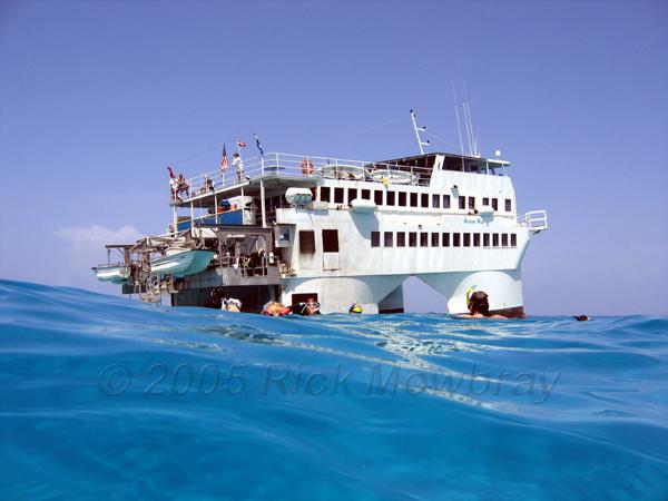 Nekton Fish Bahamas
