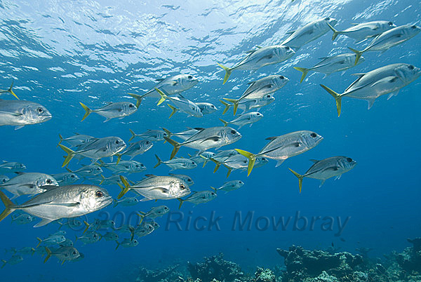 Cayman fish tale for Grand cayman fishing